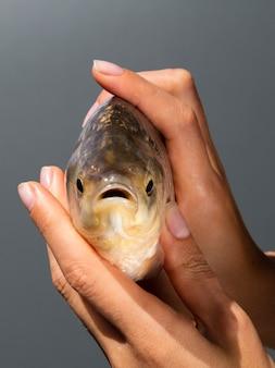 Mains, tenue, poisson frais, gros plan