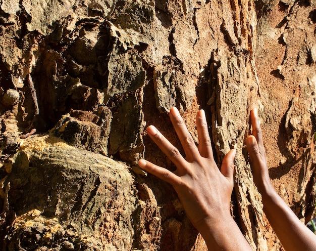 Les mains sur une texture d'arbre