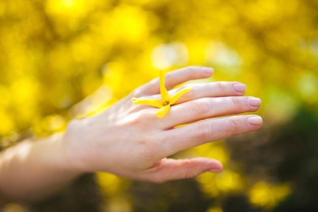 Les mains tient le printemps fleurs jaunes sont sur un fond naturel. la liberté et l'amour nature consept