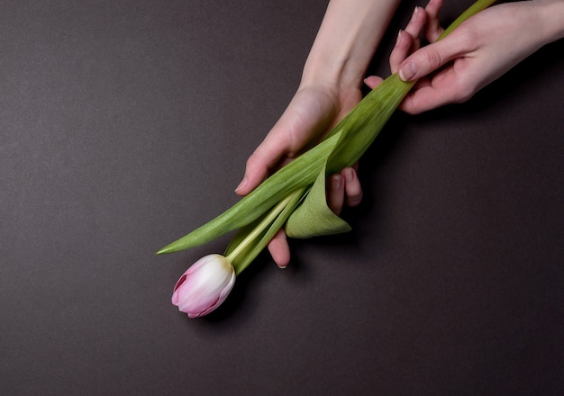 Mains avec des tulipes. le concept de déposer des fleurs aux héros tombés au combat