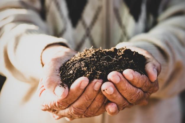 Les mains de la vieille femme tiennent une récolte appropriée.