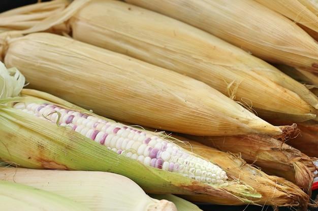 Maïs au street food
