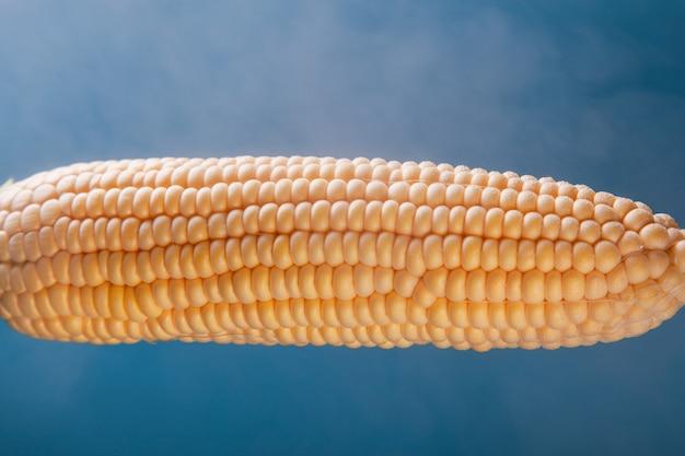 Le maïs bouilli sucré, la vapeur autour de l'épi sur un fond paradisiaque, un bon concept pour un restaurant.
