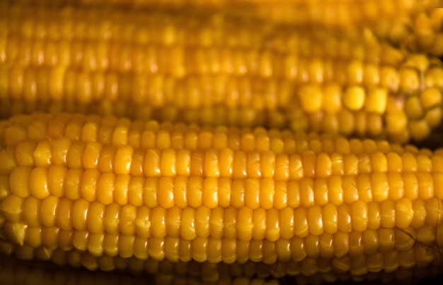 Maïs cuit. fond de nourriture