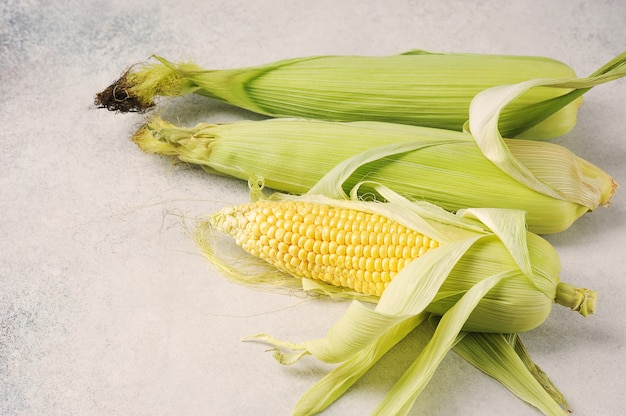 Maïs en épi sur fond gris