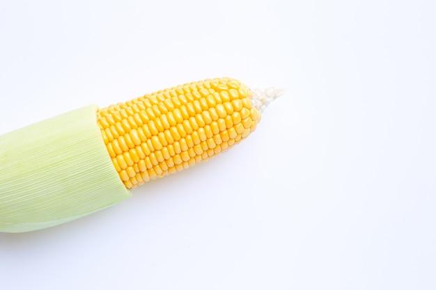 Maïs sur fond blanc.