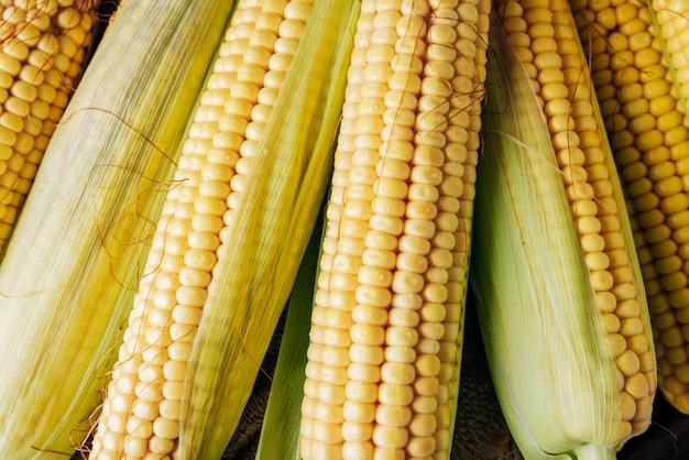 Maïs frais en épi