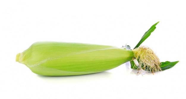 Maïs frais isolé