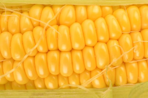 Maïs gros plan sur blanc