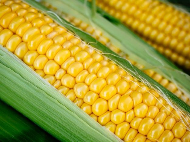 Maïs jaune mûr au feuillage vert