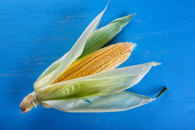 Maïs mûr jaune sur bleu