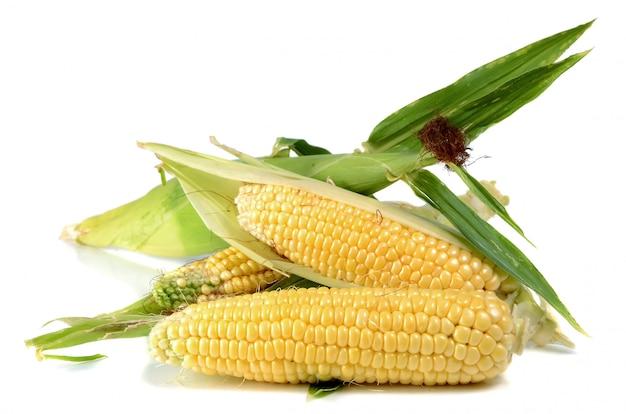 Maïs mûr et sucré