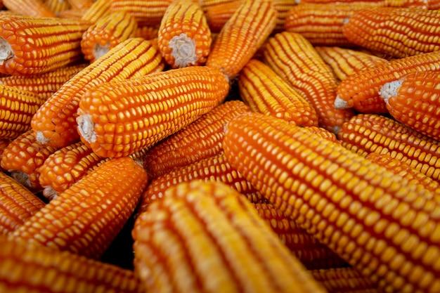 Maïs pour l'alimentation animale, texture du maïs. cors jaunes comme fond