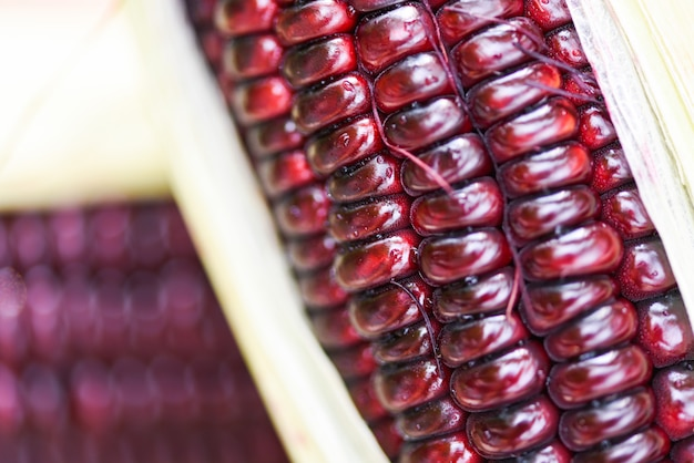 Maïs pourpre frais de près - siam ruby queen ou maïs rouge en épi