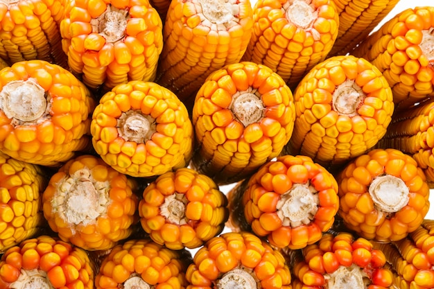 Maïs séché en épi, gros plan