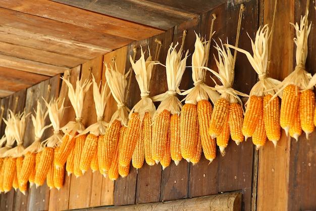 Le maïs séché est accroché au mur.