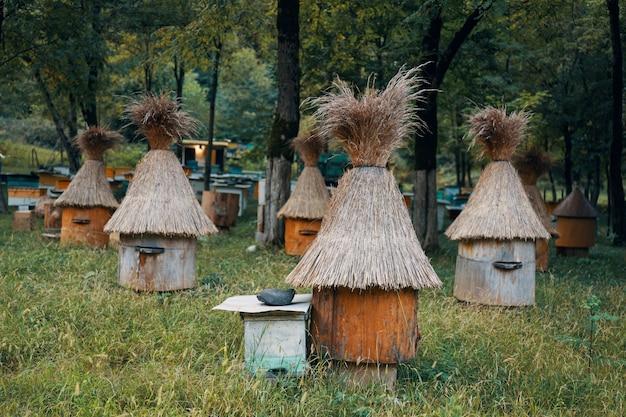 Maison d'abeilles avec des abeilles dans la nature