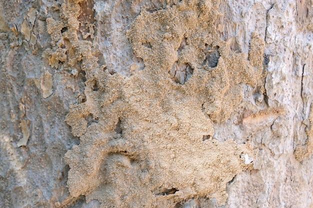 Maison en bois endommagée par les termites