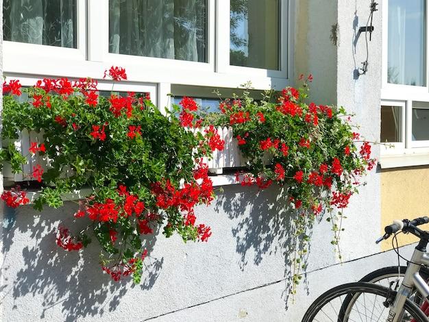 Maison colorée avec des pots de fleurs sur la fenêtre du bâtiment par une belle journée ensoleillée des vélos debout à proximité