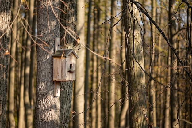 Maison étourneau en bois accrochée à l'arbre dans le parc