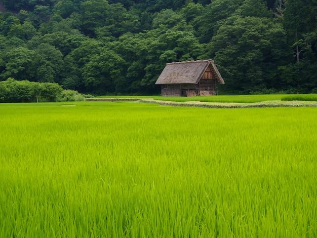 Maison gassho-zukuri, village historique de shirakawa-go en été, japon