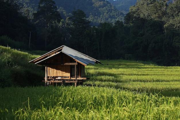 Maison en rizière