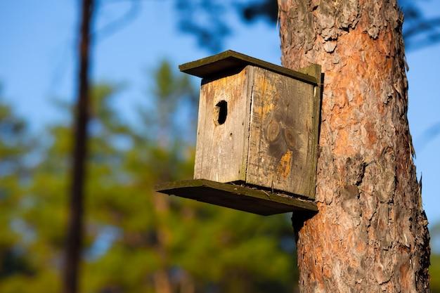 Maison starling en forêt