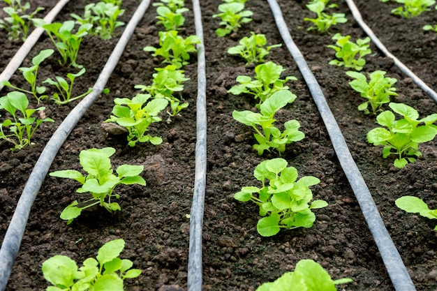 Maison verte de jeunes légumes dans le sol