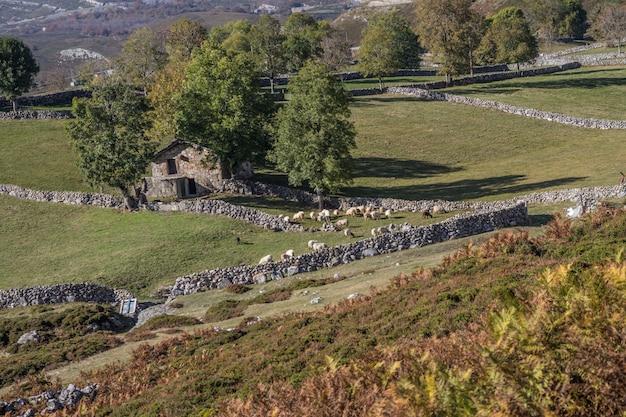 Maison de village en pierre avec moutons