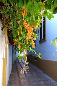 Maisons avec des fleurs dans la vieille ville de marbella en espagne