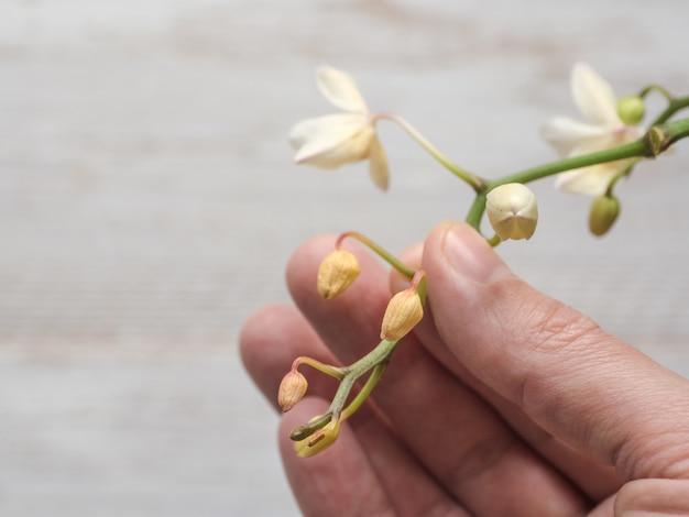 Maladie des orchidées. séchage et chute de jeunes bourgeons dans l'orchidée