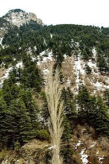 Malam jabba et kalam swat paysages paysages