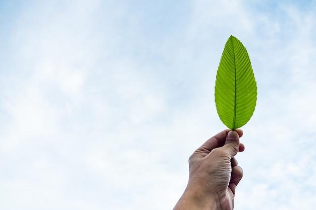 Mâle main tenant une feuille verte avec fond de ciel bleu clair. concept de l'homme et de la nature.