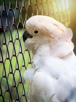 Malheureux oiseau emprisonné en cage