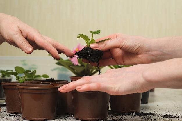 Maman, fille, planter, plante d'intérieur