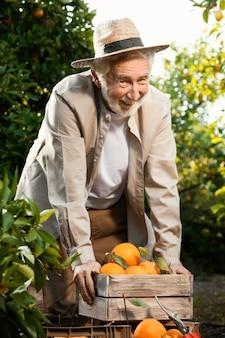Man dans la plantation d'orangers