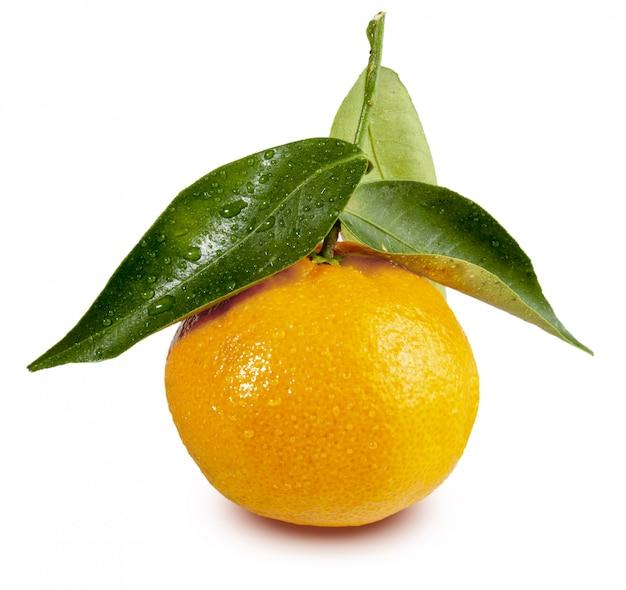 Mandarine fraîche avec des feuilles et des gouttes d'eau. isolé (clementinas, clemenvillas, satsuma, octubrina)