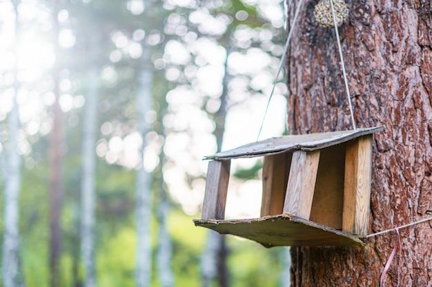 Mangeoire à oiseaux sur un arbre dans la forêt.