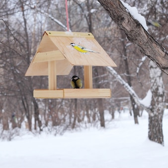 Mangeoire à oiseaux d'hiver dans un parc
