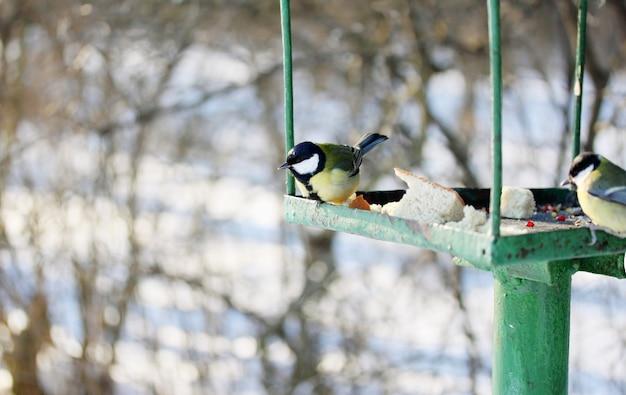 Mangeoire pour oiseaux sauvages dans le parc