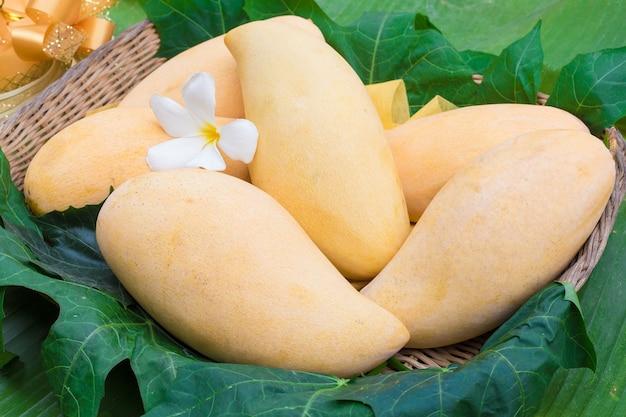 Mango barracuda mangue mûre dorée est un fruit indigène en thaïlande mango nam dok mai