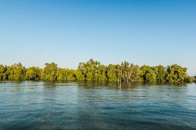 Mangroove forest dans le golfe de thaïlande