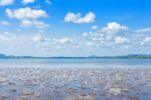 La mangrove forestière et la mer l'horizon