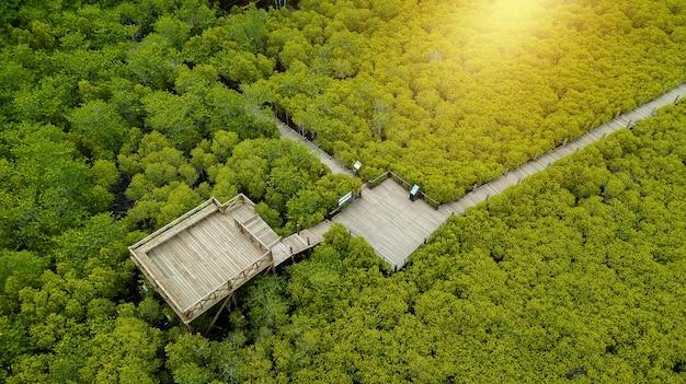 Mangroves intung prong thong ou champ de mangroves dorées de l'estuaire pra sae, rayong, thaïlande