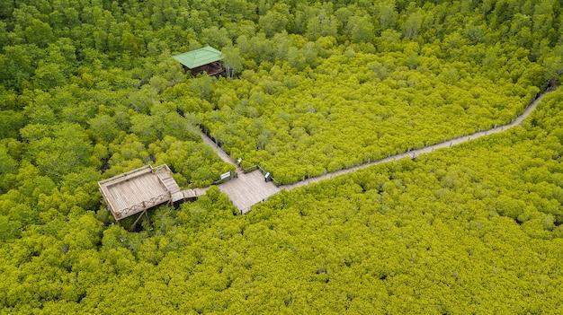 Mangroves intung prong thong ou champ de mangroves dorées à l'estuaire de pra sae, rayong, thaïlande