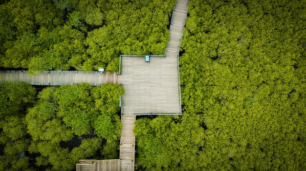 Mangroves intung prong thong ou champ de mangroves dorées de l'estuaire de pra sae, thaïlande
