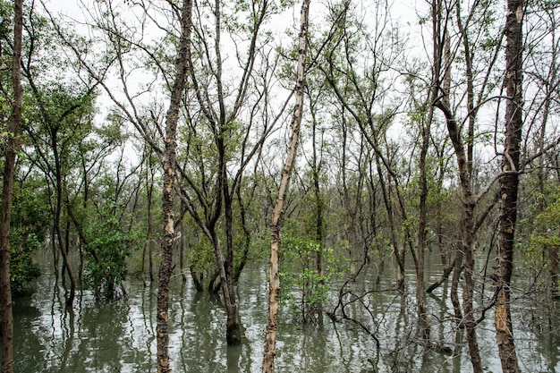 Les mangroves mortes meurent