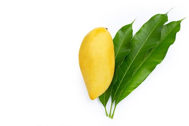 Mangue avec des feuilles sur fond blanc.