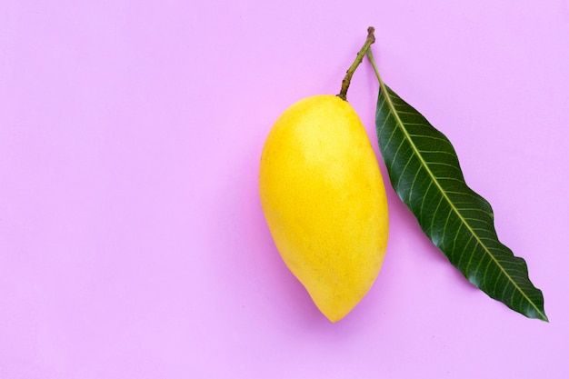 Mangue jaune sur fond rose, fruits tropicaux juteux et sucrés.