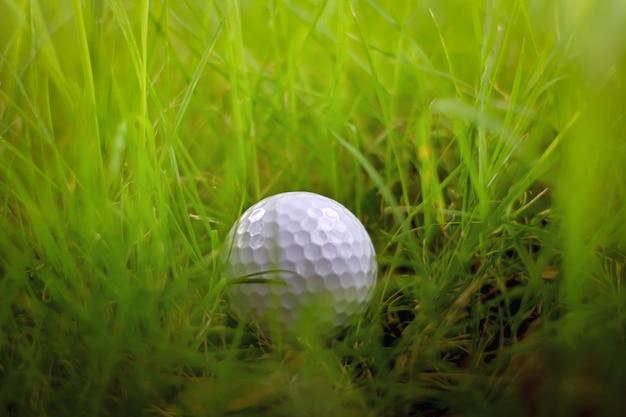 Manque, balle de golf perdue dans l'herbe verte rugueuse ou danger hors de l'allée au terrain de golf